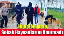 Hodri Meydan, sokak hayvanlarını unutmadı