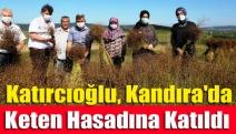 Katırcıoğlu, Kandıra'da keten hasadına katıldı